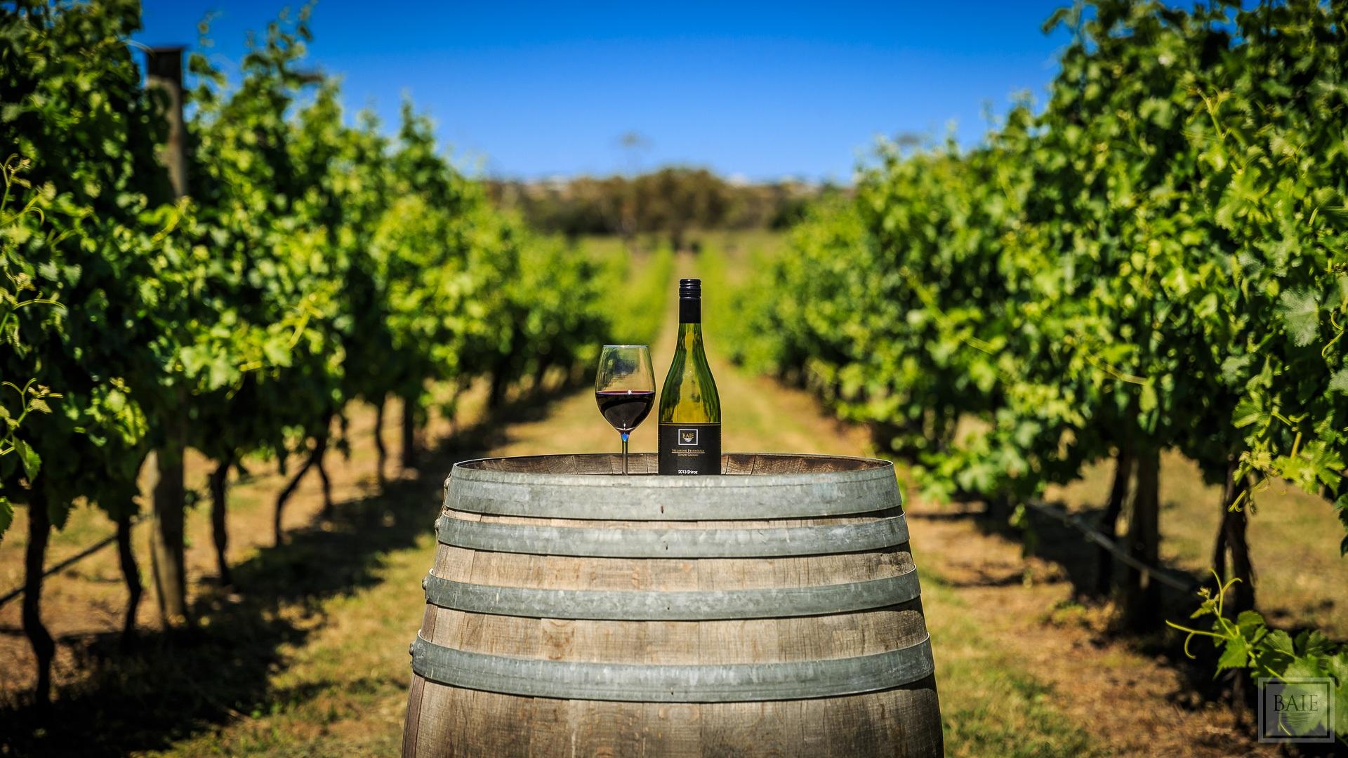 Slow Wine Guide: új, olasz megközelítés a borkritikára