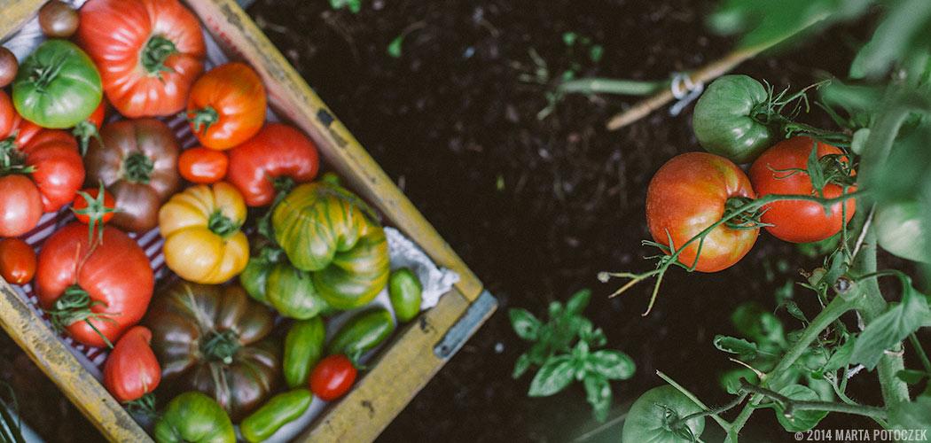 Slow Living Vlog: Kertészkedjünk Slow módon karantén idején! Tavaszi ültetési tippek a Graefl biomajor szakembereitől.