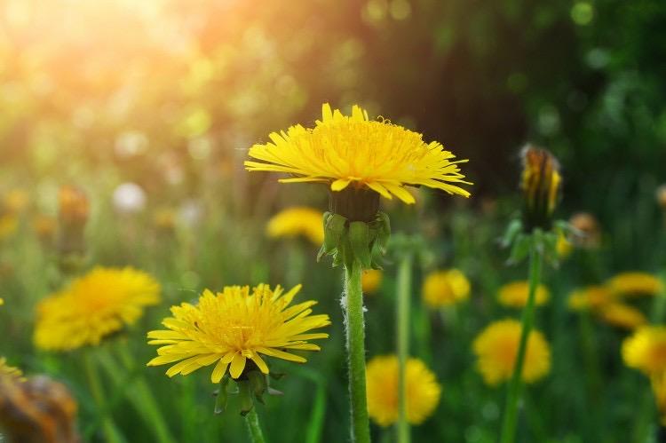 Slow Food: a vadvirágok bája lehet a mi titkos erőnk…gyüjtés a kétútközi réteken