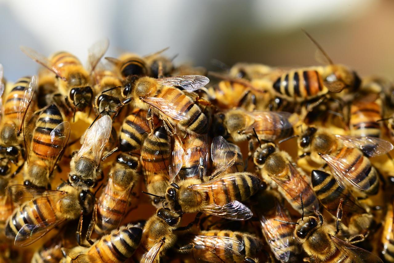 Let's save the Slow Bees and farmers!Mentsük meg a méheket és a gazdákat!